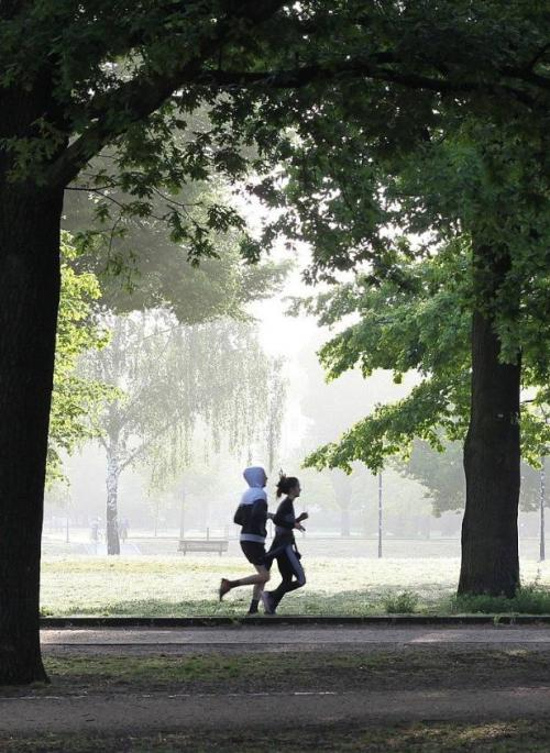 people jogging through the trees